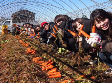 にんじん収穫体験